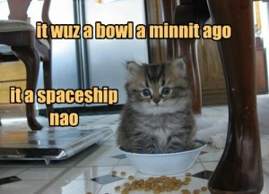 Cute Kitty Lolcat