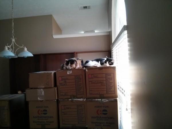 climbing mt box