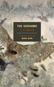 goshawk by th white