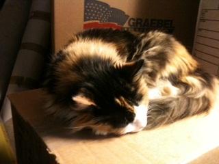 mellie face on box