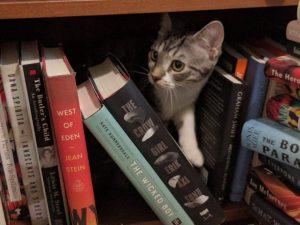 newbie kitten